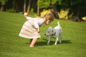 cesped artificial para mascotas del hogar